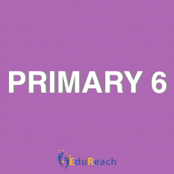 Primary 6